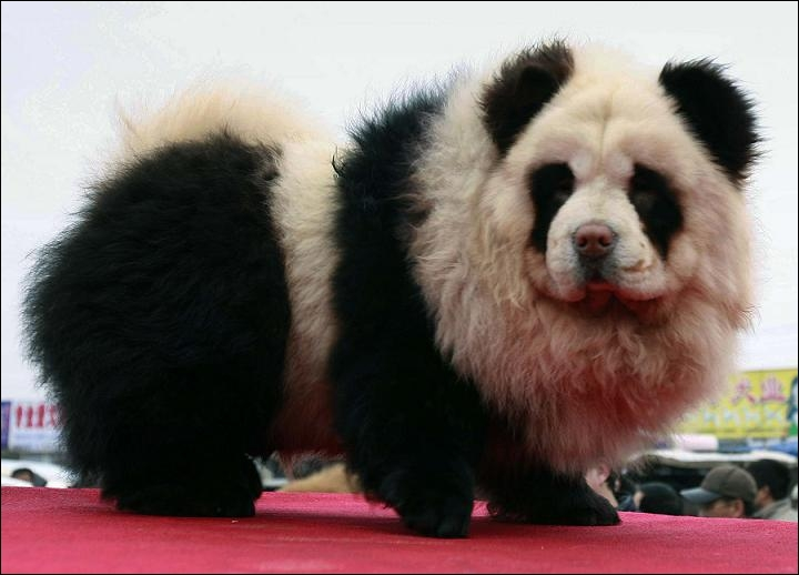 Pour finir en beauté, je vais vous demander de me dire quel animal représente la photo ?