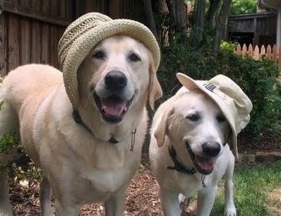 Différencier les races de chiens entre elles
