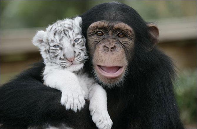 A la naissance, le bébé tigre blanc a les yeux rouges !