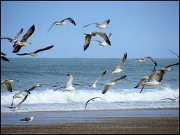 Avec des (... ) joyeux, volaient en (... ) ;