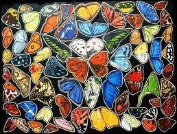 Sur l'océan (... ) des vols de papillons .