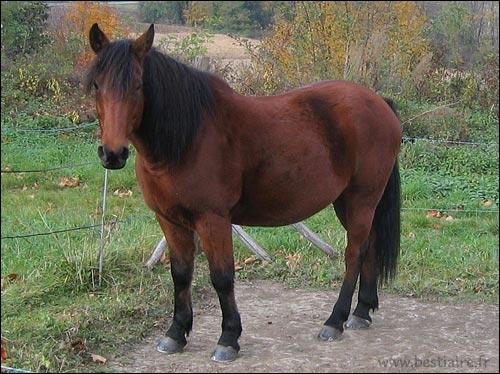 Comment s'appelle ce mammifère ?