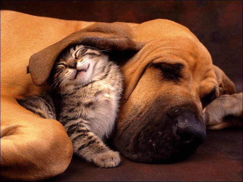 Le chien et le chat ont des vibrisses !