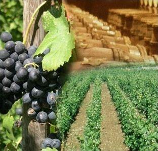 De la vigne au vin