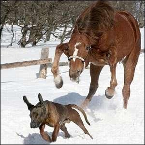 Votre cheval commence à vous emporter, que faites-vous ?