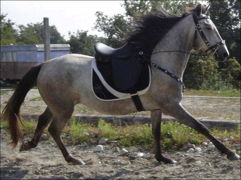 Et ce beau cheval, de quelle robe est-il ?