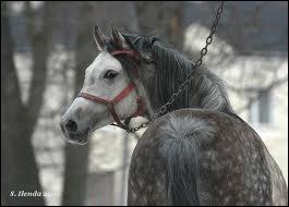 Ce cheval est gris, oui mais quelle sorte de gris ?