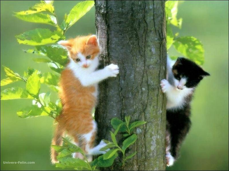 Je ne trouve vraiment personne dans cette forêt, il n'y a pas un chat...