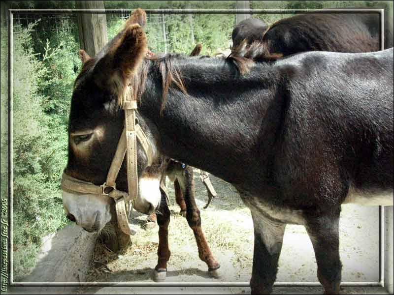 Pourquoi cet âne en a-t-il ras la casquette ?