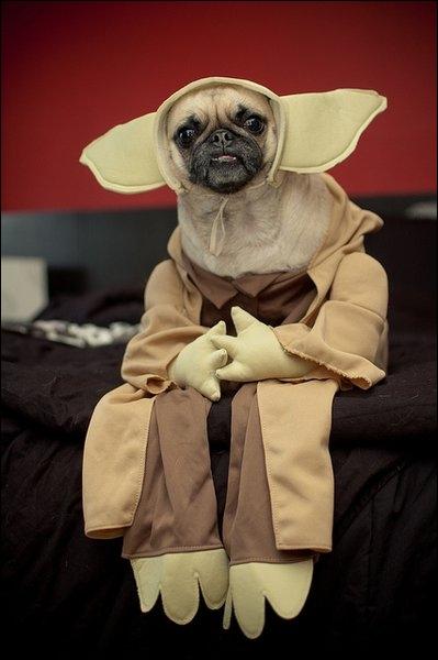 Ce chien est complètement fan de ce film, lequel ?