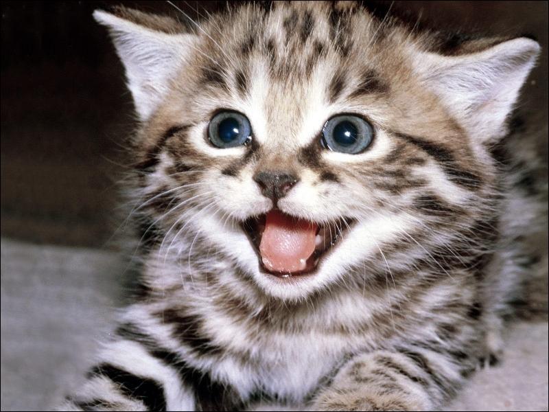 Qu'est-ce qu'une chatière ?