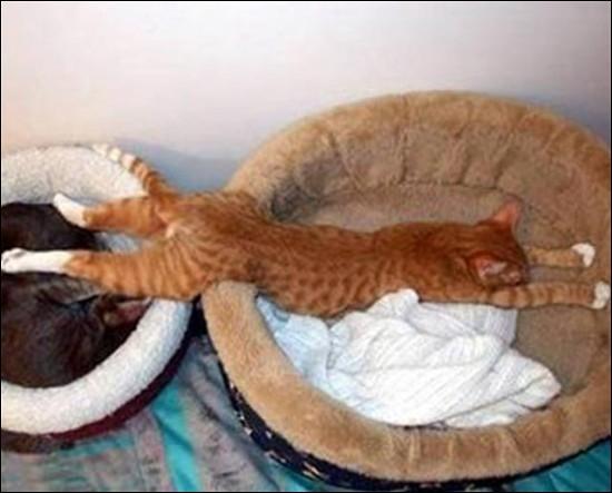 Quelle maladie du chat est transmissible à l'homme et mortelle dans tous les cas ?