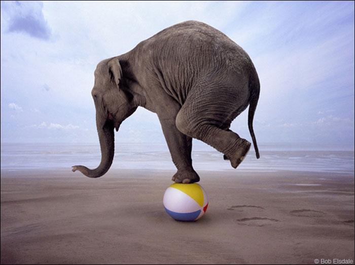 Que peut faire l'éléphant avec sa trompe ?
