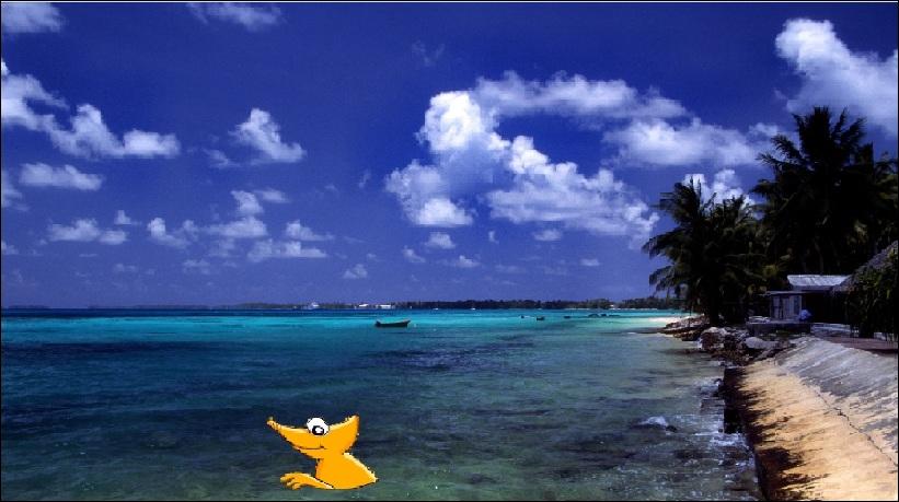 Le caméléon ne s'en fait pas, voilà maintenant qu'il fait trempette au bord du rivage de Funafuti qui est la capitale d'un archipel du Pacifique. Savez-vous lequel ?
