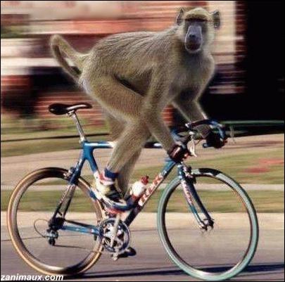 Course en ligne, contre-la-montre, sur piste, mountain-bike et BMX ont été inclus au programme des J. O. Que suis-je ?