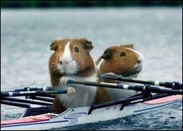 Ce sport consiste à propulser un bateau à l'aide de rames ...