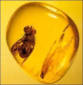 Bien qu'étant organique, je suis un minéral qui provient de la résine fossilisée :