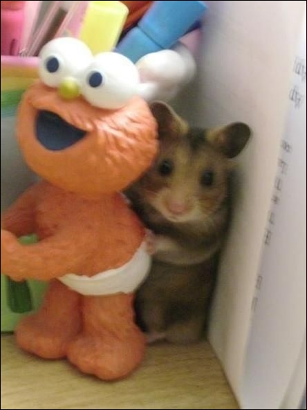 Sur cette photo, la souris est bien réelle !