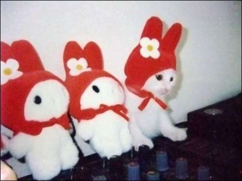 Un seul de ces trois petits lapins est réel !