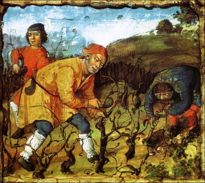 Chaque monastère possède ses vignes et les techniques progressent. Pour l'entretien de la vigne, il convient de procéder au .....comme le font les paysans sur cette illustration.