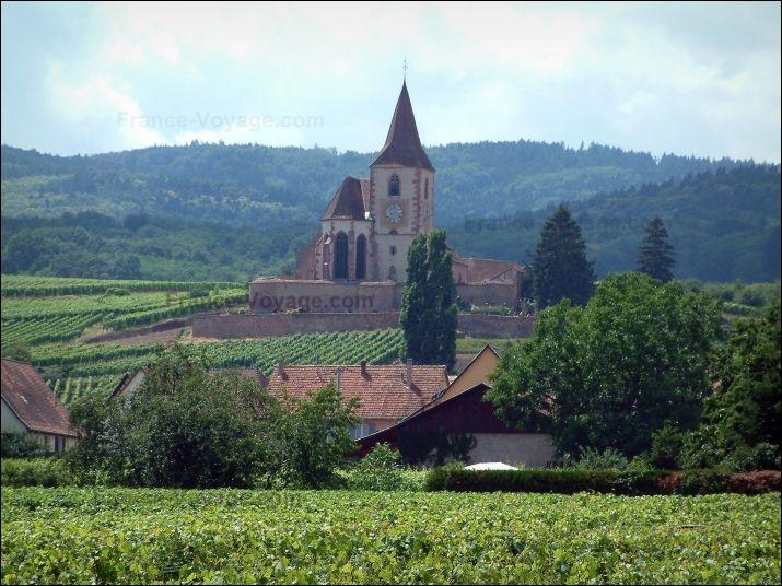 La ville constitue également l'intersection entre la Route des Vins d'Alsace et la Route Verte, appelée ainsi car entourée de sapins. Elle consiste à :