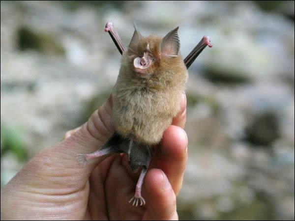 C'est si facile que j'ose à peine vous le demander, c'est bien une chauve-souris ?