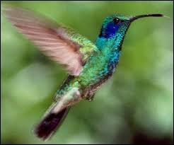 Je suis un oiseau passereau des régions tropicales, de très petite taille, au vol rapide, au long bec et au plumage éclatant. Je suis aussi appelé  oiseau-mouche . Je suis un :