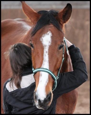 Que faut-il avoir avec un cheval ?