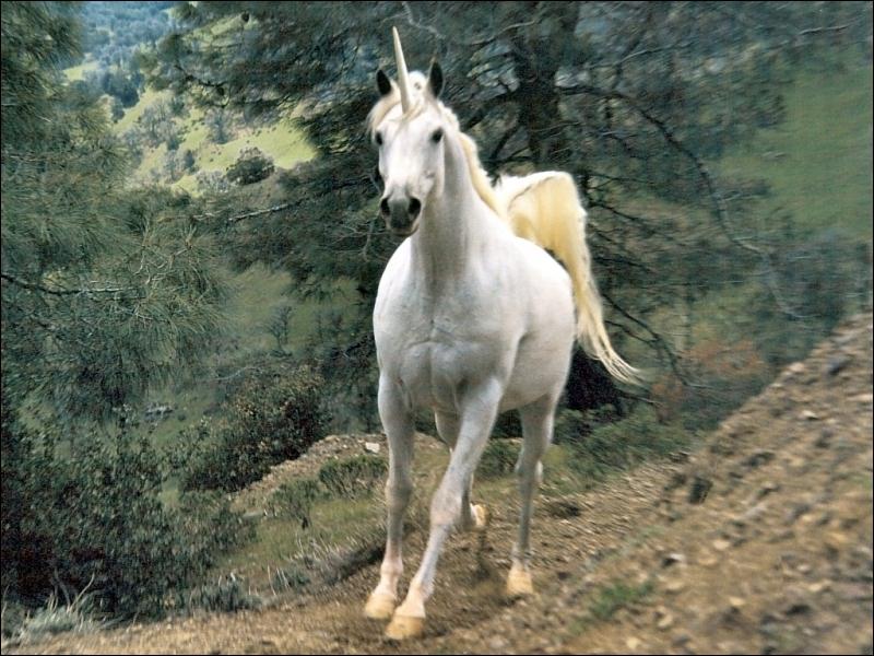 Selon la légende, qui peut approcher une licorne ?