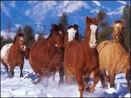 Comment vivent les chevaux ?