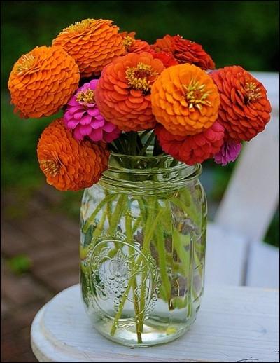 Ce sont des fleurs puissantes aux multiples pétales, très colorées, ici simplement posées dans un bocal à confiture. Ce sont des ?