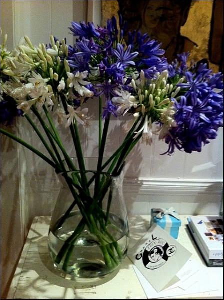 Quelques fleurs, en bleu et en blanc, de cette jolie plante nommée ?