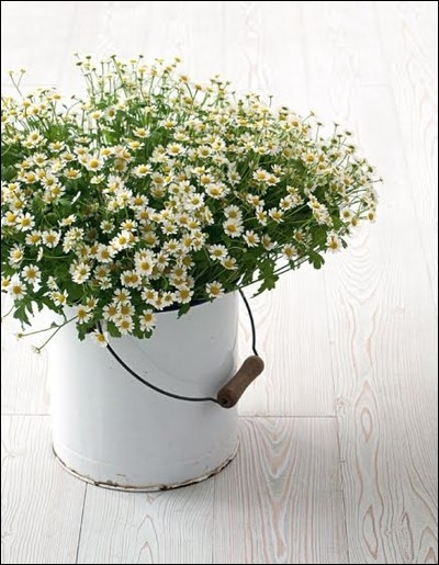 Un joli bouquet de fleurs sauvages, dont la beauté provient du volume de fleurs. La rusticité est accentuée par le seau qui sert de vase. Il s'agit de... ?