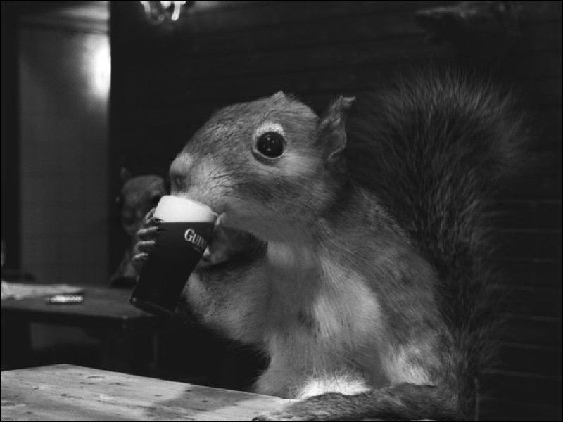 Comme les oiseaux, l'écureuil construit des nids !