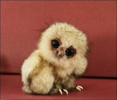 Vous serez certainement d'accord avec moi, ce bébé est une chouette, et non un perroquet !