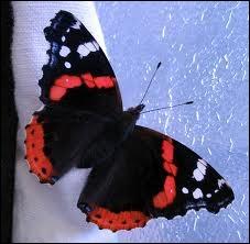 Définition de vulcain :  Vanesse d'une variété de couleur rouge et noire.