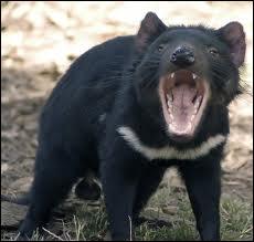 Qu'est-ce qui menace les diables de Tasmanie aujourd'hui ?