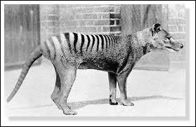 Quelle est la cause de la disparition du loup de Tasmanie dans les années 30 ?