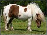 Est-ce un poney ou un cheval ?