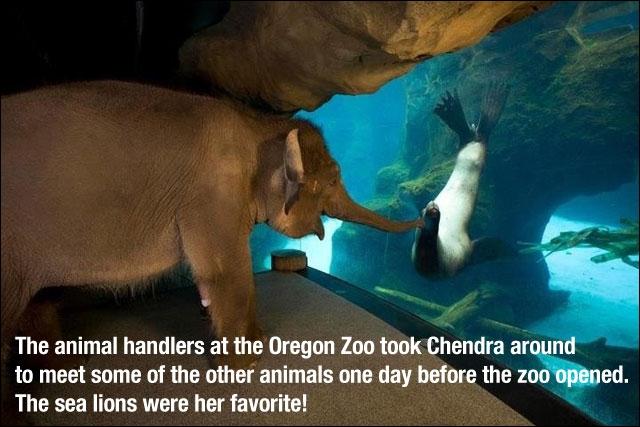 A qui cet éléphant donne-t-il le bonjour ?