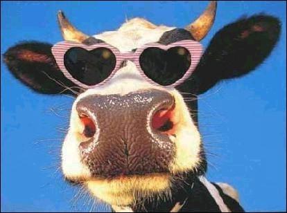 Tu veux ma photo ! La vache peut ingurgiter jusqu'à______kilos d'herbe chaque jour.