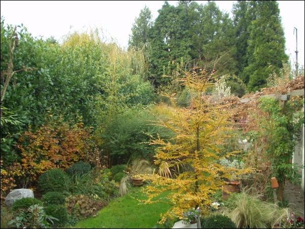 L'odeur amère d'un jardin de novembre, le saisissant silence ----- des bois