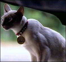 Qu'était vraiment leur petite chatte dans les 3 premières saisons ?