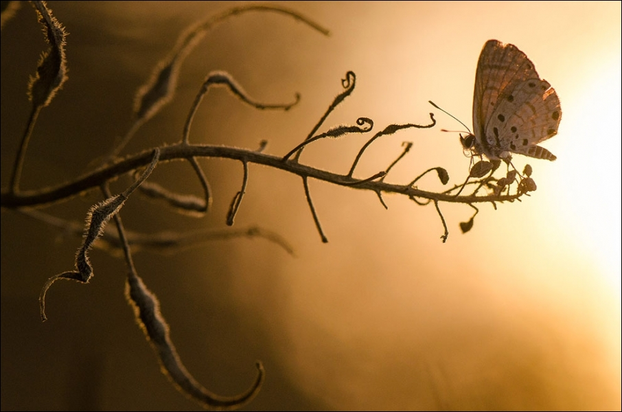 Avant d'être papillon, on l'appelle asticot !