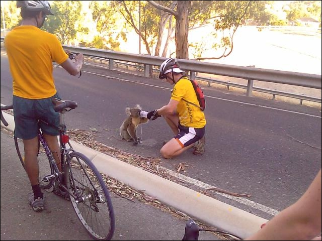 Pour quel animal ce cycliste s'est-il arrêté, afin de lui donner à boire ?