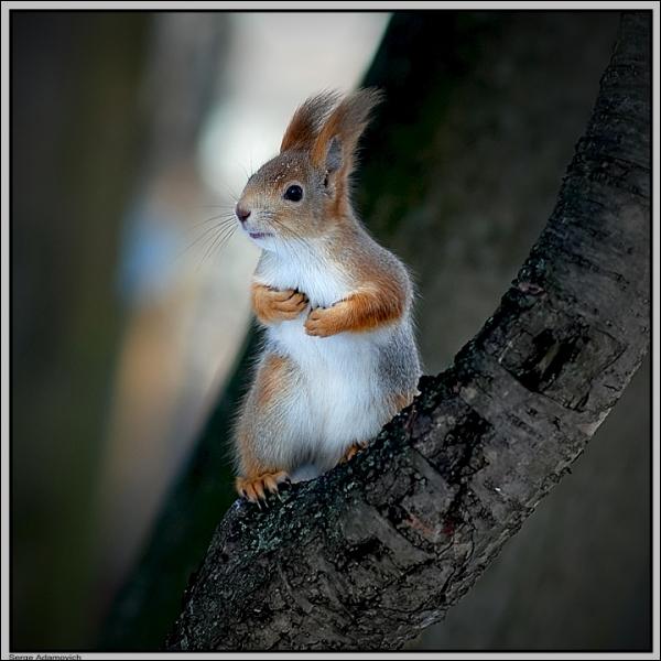 Comment s'appelle l'écureuil, logo de la Caisse d'épargne ?