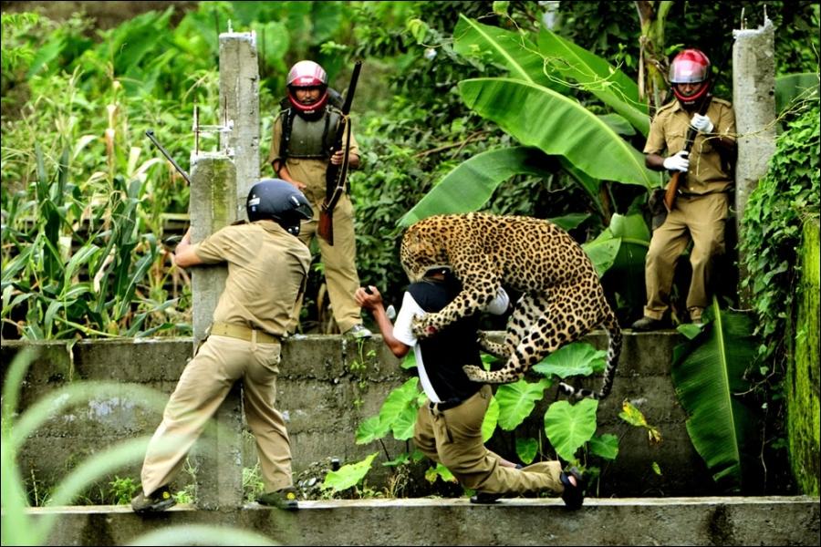 Il n'y a pas longtemps, dans un quiz précédent, j'ai prétendu que les attaques de léopards augmentaient en Inde, était-ce vrai ?