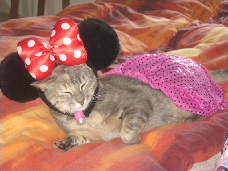 En quoi est déguisé ce chat ?