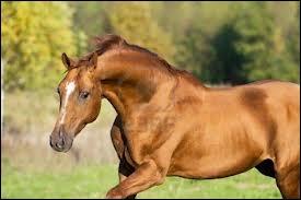 Quelle est la race de ce cheval au long cou ?