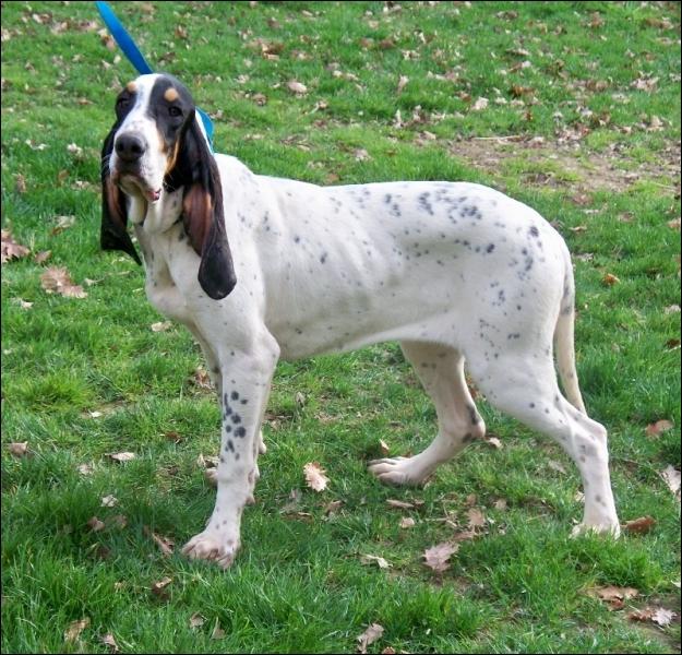 Bien-aimé Quizz Questions pour un chien 2, les races de chiens - Quiz Races  FU43